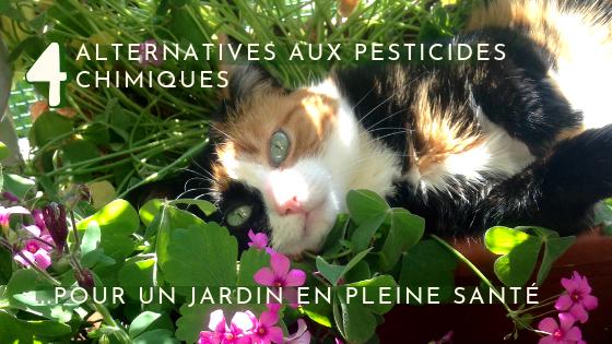 4 alternatives aux pesticides chimiques pour un jardin en pleine santé